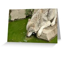 Thirsty Like  A Wolf  Greeting Card