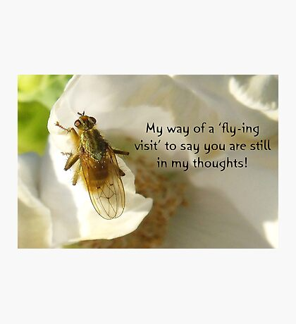 Flying Visit greeting card Photographic Print