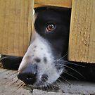 Eye See by Ladymoose
