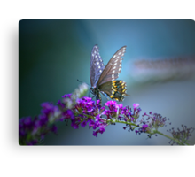 A butterfly's calling me . . . Metal Print