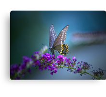 A butterfly's calling me . . . Canvas Print