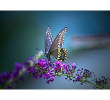 A butterfly's calling me . . . Photographic Print