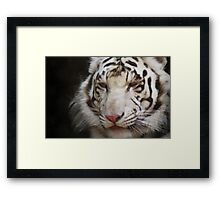 tiger brush Framed Print