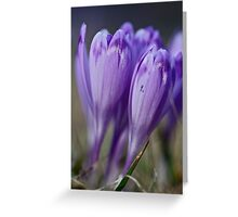 1093 . Crocus sativus . God bless you each and every day with much love and Joy and wonderful inside and out !! Greeting Card