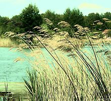 enchanted lake by enchantednature