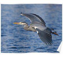 Grey heron Inflight 2 Poster