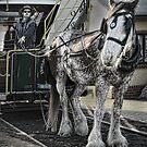 horse-drawn by carol brandt