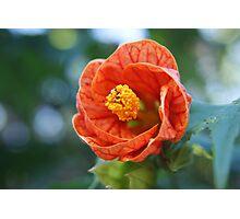 Bright Orange Lantern Photographic Print