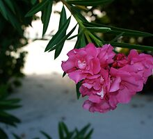 Flower in the Maldives by iLaw