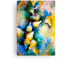 Pears and Lace... Canvas Print