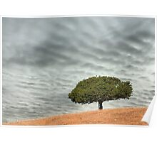 Green tree on rolling hill with dramatic sky Poster