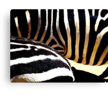 The Striped Fur Canvas Print