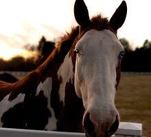 Blue Eyed Horse by Scott LePage