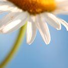 Reaching for the Sunshine by Tamara Brandy