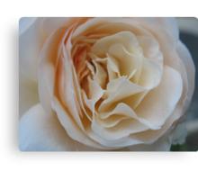 Apricot Souffle Rose Canvas Print