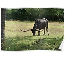 Impressive Horns Poster