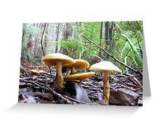 Fungi Treasures amongst forest Giants - Yarra Ranges Greeting Card