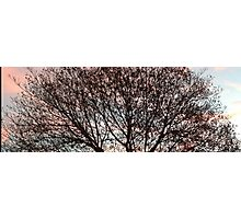 Sunset Through Tree Branches Photographic Print