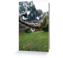 Winter Magnolia Greeting Card