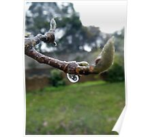 Winter Magnolia Poster