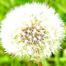 make a wish... by CourtneyMichell