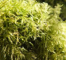 Simply Moss. by Livvy Young