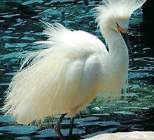 Snowy Egret by Sheryl Unwin