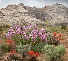 Wildflowers at Split Mountain by Kim Barton