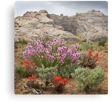 Wildflowers at Split Mountain Canvas Print