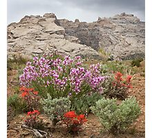 Wildflowers at Split Mountain Photographic Print