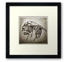 Zinc fly Framed Print