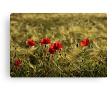 adding a touch of colour Canvas Print