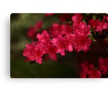 Red and frilly Canvas Print