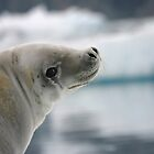 New Friend in Antarctica by Lisa Davidson
