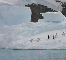 Penguin School by Lisa Davidson