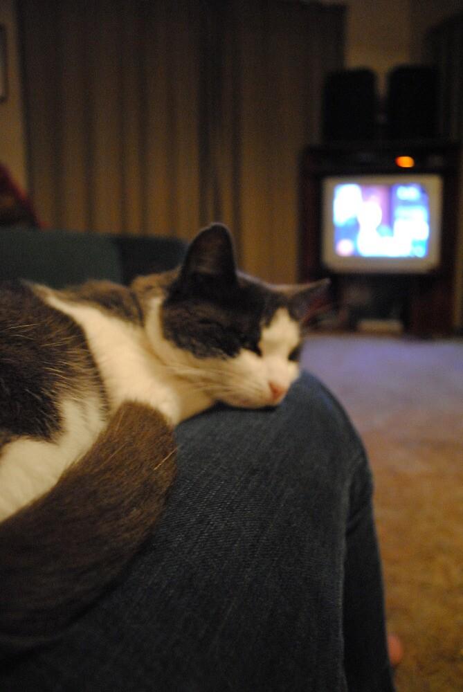 kitty by abbeydawber