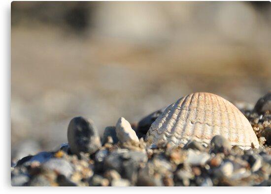 Seashells on the seashore.... by Heather Thorsen