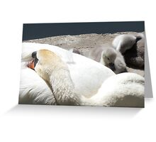 Sleeping Swan's Greeting Card