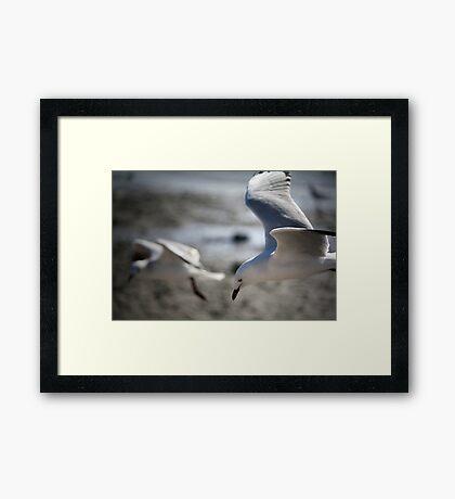 ~Gull Dreaming~ Framed Print