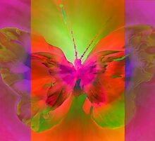 "Butterfly 2 (from ""Butterflies"" collection) by EvaMarIza"