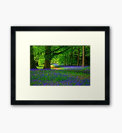 Bluebell Wood - Thorpe Perrow #3 Framed Print