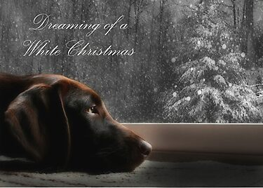 Dreaming of A White Christmas - Card by Lori Deiter