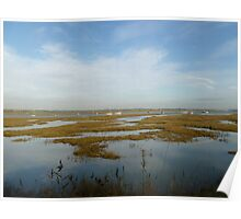 Marshes Poster