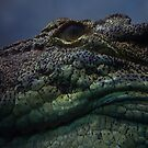 croc eye by shallay