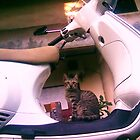 Wrong Drive Cat by kadehara