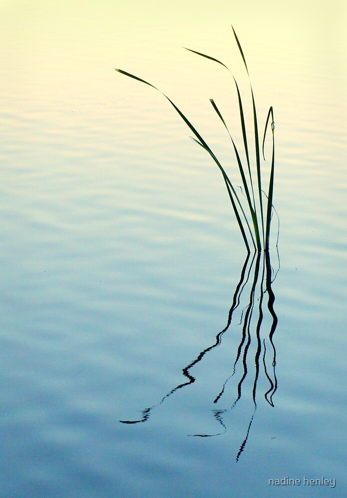 Herdsman Lake at sunrise 2 by nadine henley