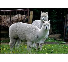 Llama Llama Photographic Print