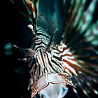 Yawning lionfish  by Stephen Colquitt