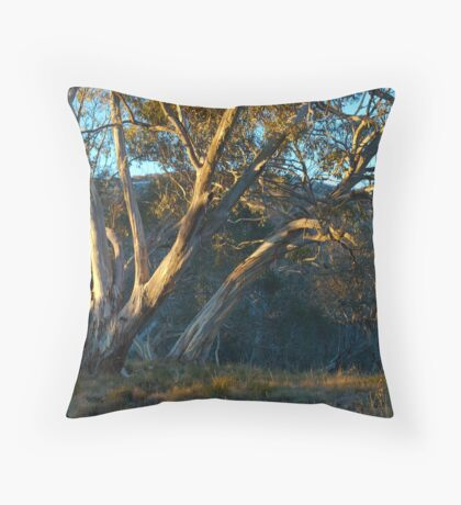 Morning light on winter trees Throw Pillow