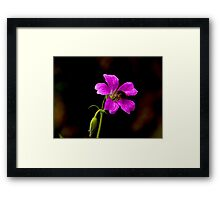 Foraging Bee #1 Framed Print